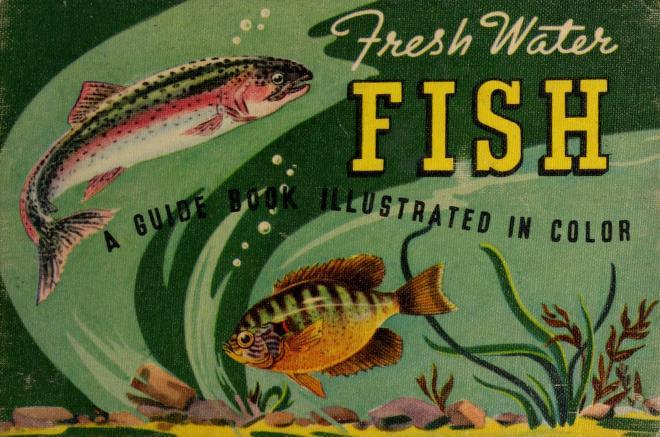 Fresh water fish by Joseph Charles Godfrey